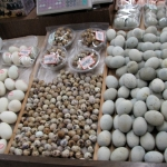 超市鸡蛋 Supermarket Eggs