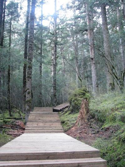 森林通道 Forest Trail